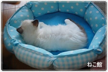 blog8_20130807072344856.jpg