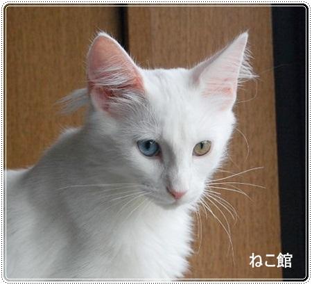 blog_20130730124637bf9.jpg