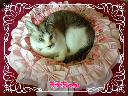 blog_20130819185121a5f.jpg