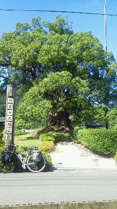 2012cycle501.jpg