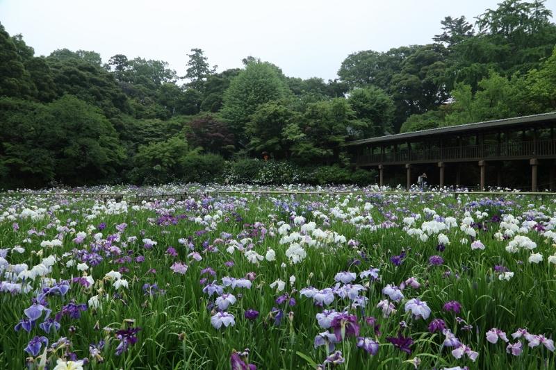 hondoji0612_0007f.jpg