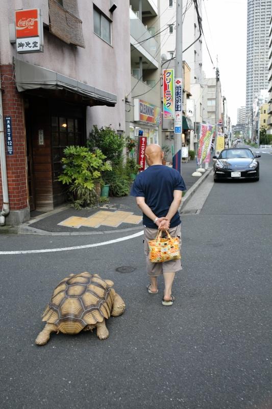toyosu0706_0041f.jpg