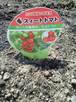 20130506畑~♪トマト2