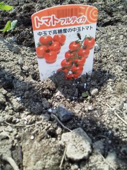 20130506畑~♪トマト3
