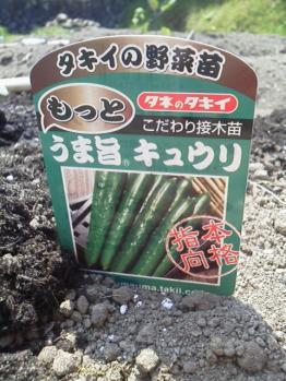 20130506畑~♪きゅうり1