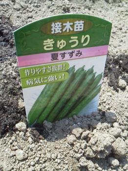 20130506畑~♪きゅうり3
