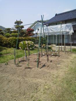 20130506畑~♪