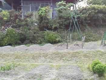 20130509伐採2