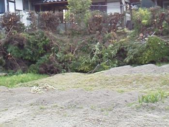 20130509伐採