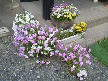 20130521玄関前の花~♪3