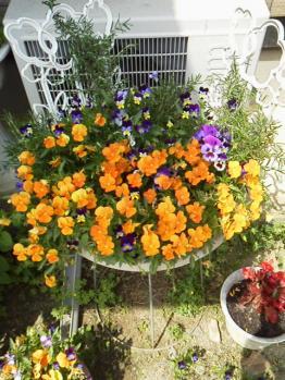 20130521玄関前の花~♪2