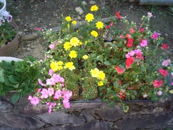 20130531花の苗