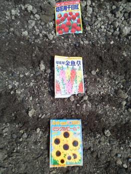 20130618花壇~♪種まき完了(花)