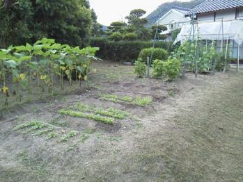 20130630野菜畑