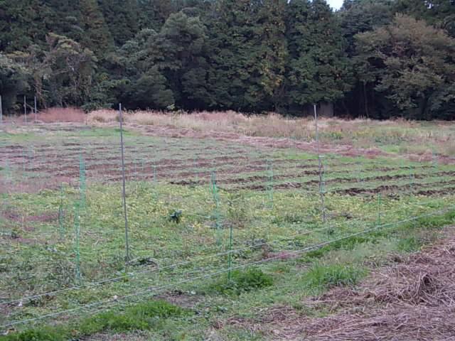 Vineyard 20131112
