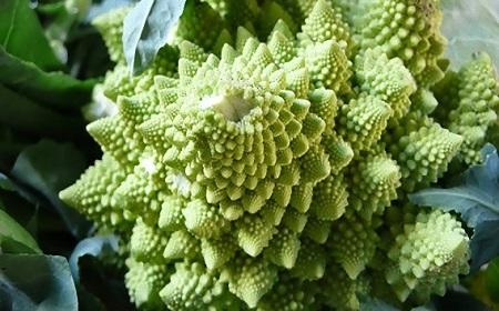 数学的な野菜~