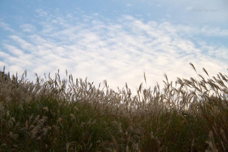 秋の雲を背景に