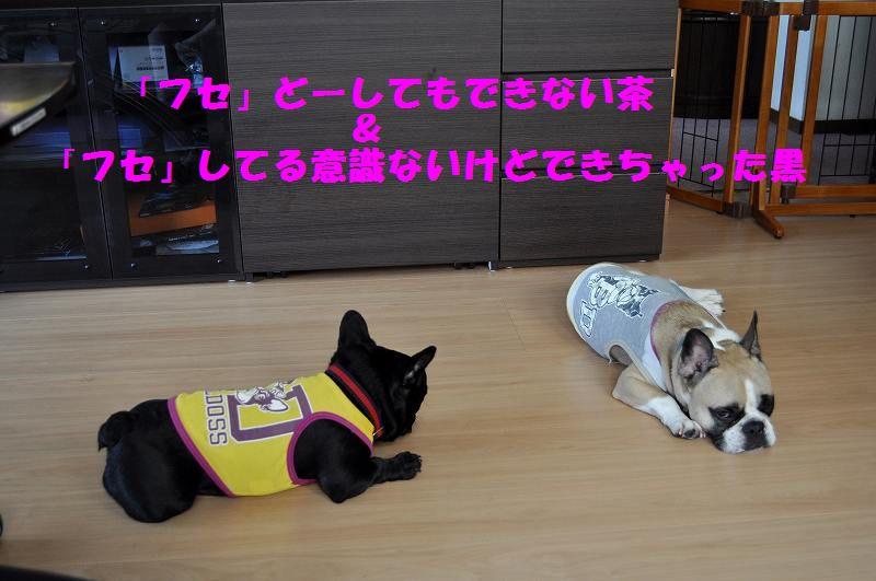 003_201311141342302d1.jpg