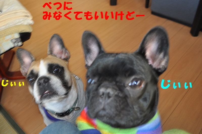 076_20131125140836ae1.jpg