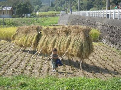 稲刈り_20140929