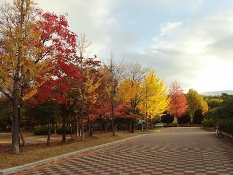 25秋緑地公園1