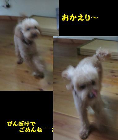 IMG_1578b.jpg
