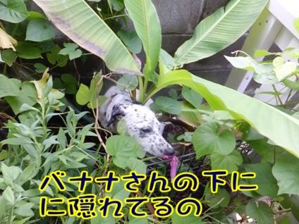2013_0916_091716.jpg