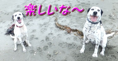 blog_0601_112908.jpg