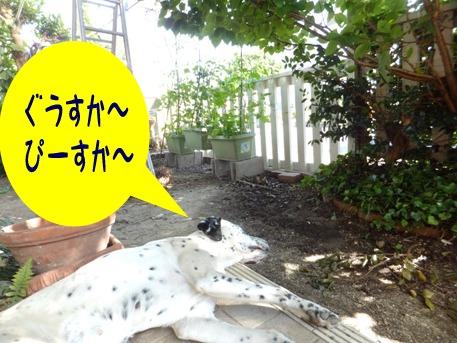 blog_0616_162502.jpg
