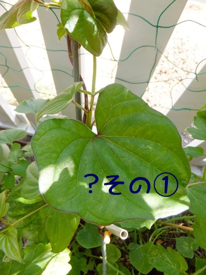 blog_0616_162606.jpg