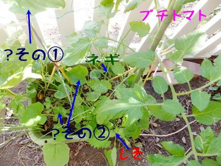 blog_0616_162703.jpg