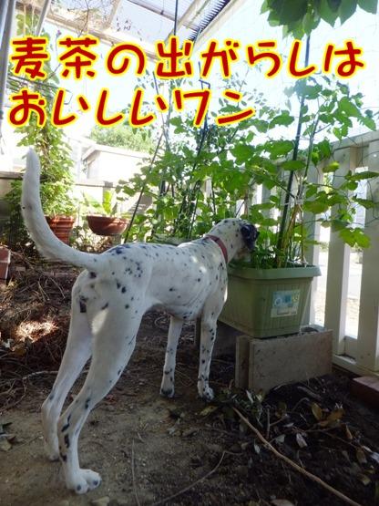 blog_0616_163550.jpg