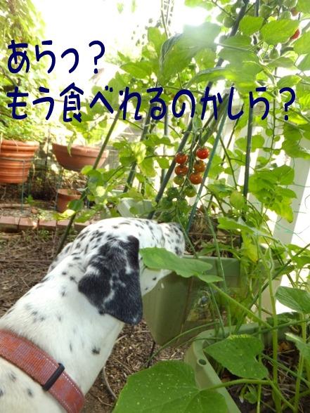 blog_0622_163849.jpg