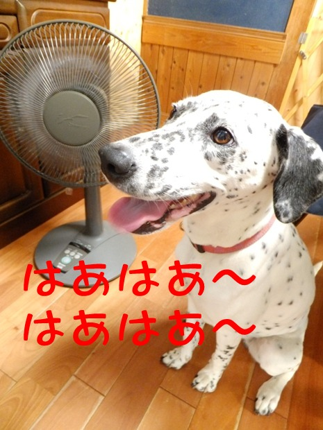 blog_0709_171922.jpg