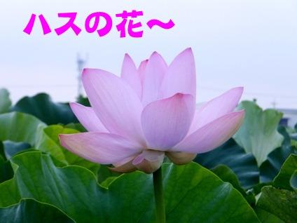 blog_0722_061539.jpg