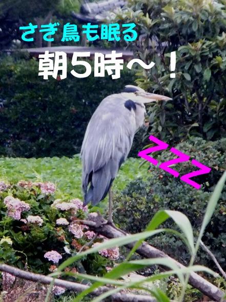 blog_0724_060017.jpg