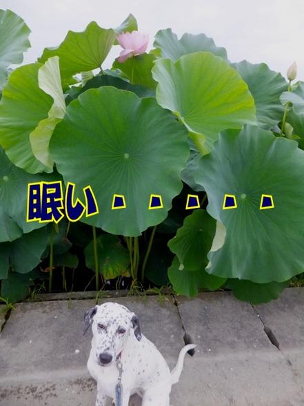 blog_0724_060445.jpg