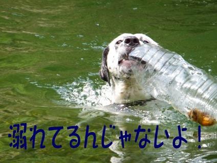 blog_0803_103256.jpg