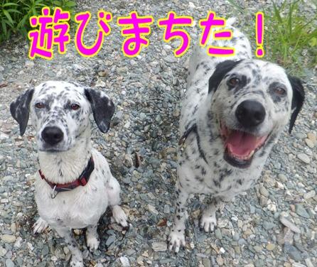 blog_0803_104807.jpg