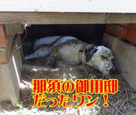 blog_0818_111056.jpg