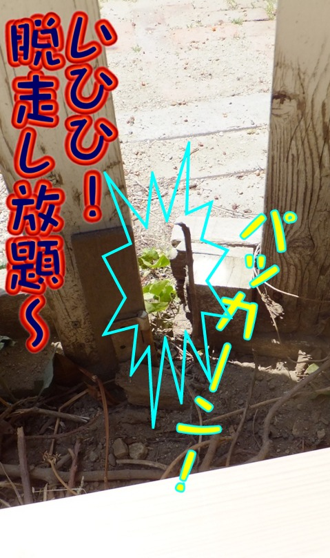 diy_0506_115647.jpg