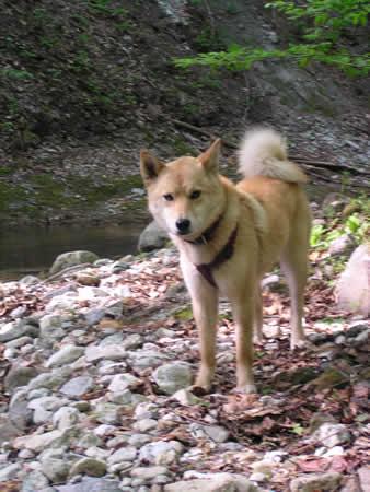 2003年秋-奥新川渓谷3
