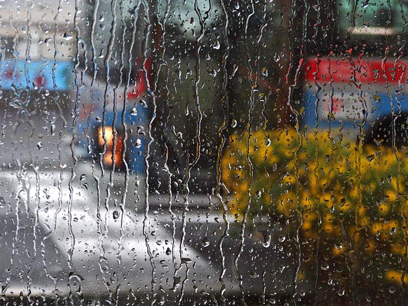 131110雨の日曜日2