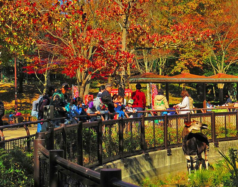131123金沢動物園紅葉2,5