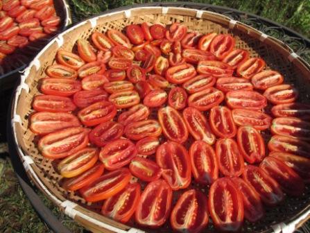 ドライトマト作り