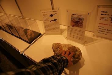 化石に触ろう♪・・・ウンチだけど。笑
