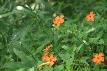 何の花なんでしょう??
