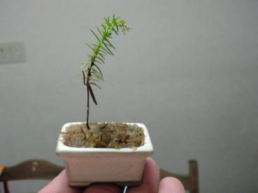 指の上に乗る鉢植え♪