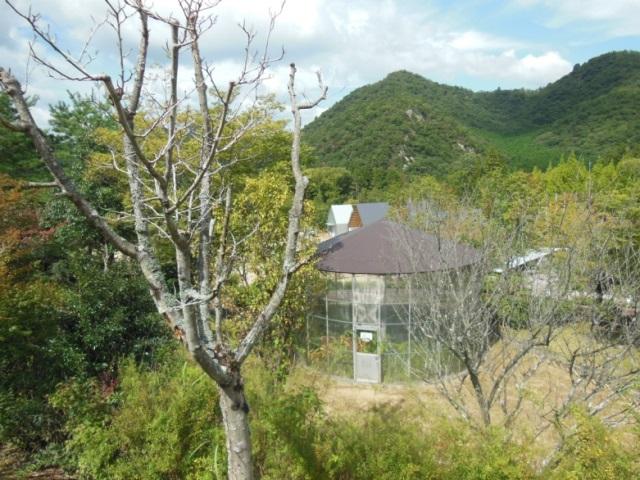 森よこ景色①(640)