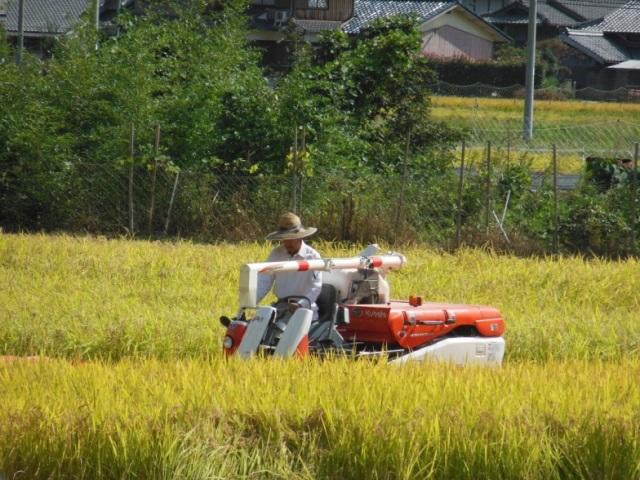 稲の収穫(640)